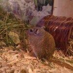 mäuse29.jpg