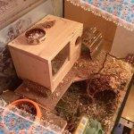 mäuse37.jpg